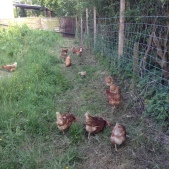 Fresh Eggs Available Daily